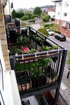 My Great Outdoors: Casi\'s Lush Garden and Dinner Deck | Pinterest ...