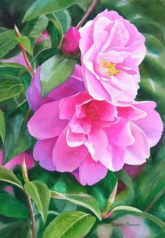 Deep Pink Camellias by Sharon Freeman - Deep Pink Camellias Painting - Deep Pink Camellias Fine Art Prints and Posters for Sale