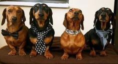 DOXIES !!! by cora