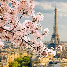 Eiffel Tower, Paris in spring  Find Super Cheap International Flights to Paris, France ✈✈✈