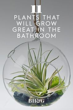 Your bathroom could use some greenery too! Each of these plants will appreciate the extra humidity and dim lighting. #tropicalplants #houseplants #indoorgardening #plantsforyourbathroom #bhg Dim Lighting, Tropical Plants, Beautiful Bathrooms, Houseplants, Greenery, Indoor House Plants, Potted Plants