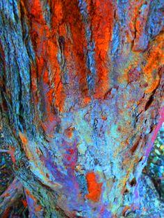 Tree Bark, Diamond Bar