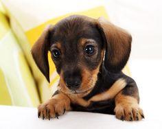 dog breeds small to medium