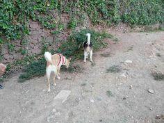 Juegos en el parque canino 10/16 Monty,  Robin