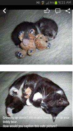 It has a little bear!
