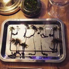 【marolien2】さんのInstagramをピンしています。 《培養容器のお整理。心が落ち着く😌新芽がいっぱい出ていたので親株から離してまた培養容器へ😌オペみたい🍴#plants#green#platycerium#moss#mossgarden#lovegreen#indoorgarden#indoorplants#mossterrarium#terrarium#苔#苔テラリウム#コケテラリウム#テラリウム#植物のある暮らし#観葉植物#interior#インテリア#コウヤノマンネングサ》