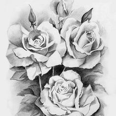 pencil drawings of flowers - Google Search More