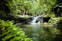 Japan's largest tropical rainforest Iriomote Island, Okinawa, Japan