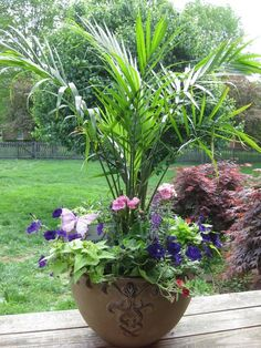 love the palm, large container garden, - Gardening Choice Org