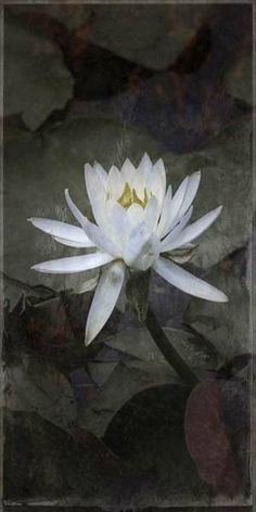 """Flowers in Neutral Moment-2014 """"Nymphaea(Water lily)-#5"""" Archival pigment print Photo by Soichi Oshika"""