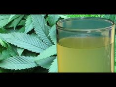 The Health Benefits of Juicing Raw Cannabis