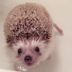 Biddy the hedgehog :)