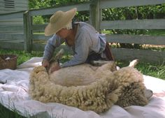 Farming & Agriculture: The Fine Art of Sheep-Shearing — for Fun and Profit