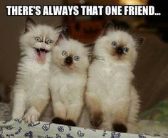 cute and funny cat pictures