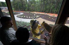 Bee battle seeks hearts and minds | Star Tribune