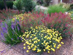 Xeriscape gardening in Santa Fe, New Mexico
