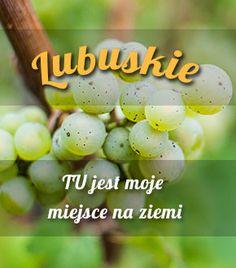 Lubuskie i winnice