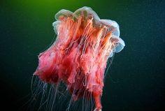 15 Fotografías alucinantes sobre la vida bajo el mar | Curiosidades