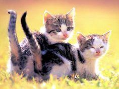 Kattunger - bilder på skrivebordet: http://wallpapic-no.com/dyr/kattunger/wallpaper-32002