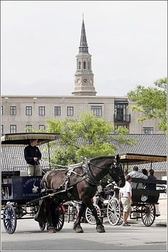 Charleston SC ~ This photo really captures my memories & love for Charleston. Never got to take a carriage ride, but it was a blessing just to see & experience their beauty & elegance.