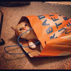 orange kitty in Urban Outfitter bag.