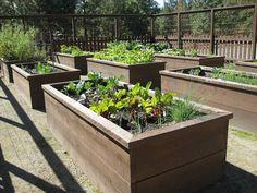 plusieurs de carrés potagers surelevés dans le petit jardin