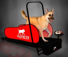 The dogPACER dog treadmill is perfect for dogs from 1lb up to 179 lbs. Only $499.00 Go to www.dogpacer.com and order your dogPACER today!