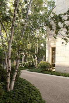 garden designed by Douglas Hoerr  Love the Birch trees and pea stone path