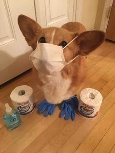 Funny Animal Memes, Dog Memes, Funny Animal Pictures, Funny Dogs, Funny Memes, Animal Funnies, Cute Little Animals, Cute Funny Animals, Funny Cute