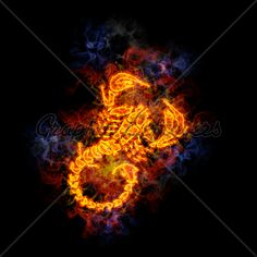 Fire Scorpion Scorpio Zodiac, Medical Illustration, Scorpion, Perfect Photo, Royalty Free Photos, Art Images, Clip Art, Flowers, Pictures