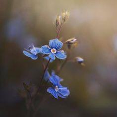 """좋아요 1,553개, 댓글 13개 - Instagram의 🌷🌼Flowers feature🌼🌷(@bns_flowers)님: """"flower shot of the day 📷 Artist : @_.afka._ 💥 Congratulations : 🎉 🏆 🎉 ~ ~ ~ ~ ~ ~ ~ ~ ~ ~ ~ ~ ~ ~ ~…"""""""