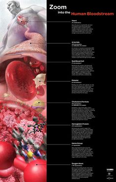 Zoom into the Bloodstream from the human body transitioning into the heart, arteries, to blood cells, to the hemoglobin inside, to the oxygen molecules carried through out the body. Awarded First Place in the Illustration category of the 2008 National Science Foundation (NSF) and Science's International Science and Engineering Visualization Challenge. // Artwork by Linda Nye