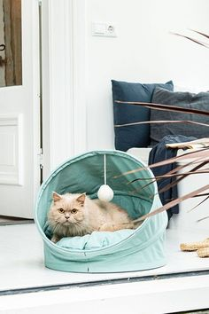 Alles voor je hond, kat, vogel of knaagdier! Ontdek het assortiment huisdierbenodigdheden op onze site. Site, Hanging Chair, Throw Pillows, Furniture, Home Decor, Everything, Homemade Home Decor, Cushions, Decorative Pillows