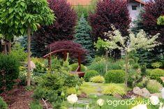 Igiełkowy ogródeczek - strona 525 - Forum ogrodnicze - Ogrodowisko