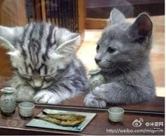 """""""bless us o lord, for these thy fishies, for which we are about to chomp.  a-nom-nom-nom.""""  i wonder if they're 'cat'olic?"""