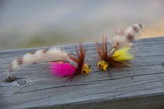 unnamed carp fly