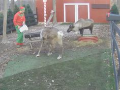 Live feed of Santa's reindeer. Watch Santa feed them 3 times/day from Nov. 16 to Dec. 24.