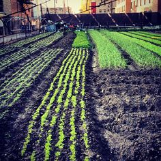 A #farm in the middle of #Chicago.