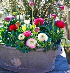 Garden Pots, Garden Cottage, Garden Inspiration, Floral Arrangements, Frost, Floral Wreath, Planters, Wreaths, Flowers