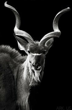 Arslan Ali - Google+ - Beautiful Black and White Animals Photography Blank and…