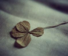 i still have the four leaf clovers i found when i was a kid...