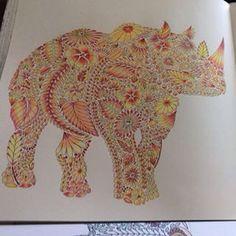 Rhino - Animal Kingdom by Millie Marotta