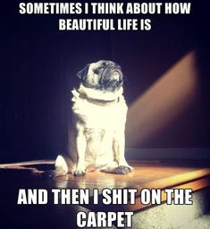 Sometimes I Think About How Life Is Beautiful And Then Shit On The Carpet
