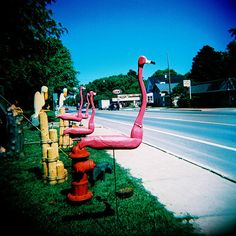Uploaded by Find images and videos about wood, holga and michigan on We Heart It - the app to get lost in what you love. Miss Florida, Greater Flamingo, Flamingo Garden, Holga, Pink Flamingos, Beautiful Birds, Old World, Pretty In Pink, Sea Shells