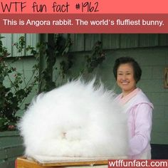 Uh that's just a huge dust bunny