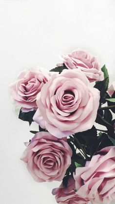 Simple and beautiful😍 Very nice wallpaper Recommended . amazing pretty wallpapers Simple and beautiful😍 Very nice wallpaper Highly recommended Simple and beautiful😍 Very nice wallpaper Recommended . Pastel Flowers, Flowers Nature, Real Flowers, Pink Roses, Beautiful Flowers, Pastel Pink, Trendy Wallpaper, Pretty Wallpapers, Flower Wallpaper