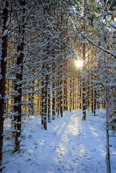 Sun Throw the Bare Trees with Snow on the Ground