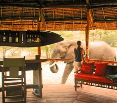 selous-game-reserve-impala-tented-camp