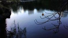 冬迎え・秋送るー新宿御苑にて。 겨울 맞이하고 가을 보낸다.