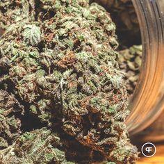Our Buddha's Tooth may enhance astral traveling during meditation. ✌️ #phantomfarms #mightytastycannabis #sungrown #oregongrown #organic #cannabis #marijuana #loyaltosoil #inbend #portland #roguevalley #ommp #leafly #buddhastooth #dharmadiesel #bluedream #hybrid #smokewithus #weshouldsmoke #ganja #pot #humpday